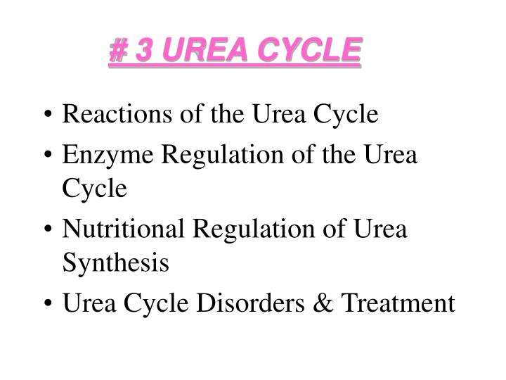 Ppt 3 urea cycle powerpoint presentation id1285362 3 urea cycle ccuart Image collections