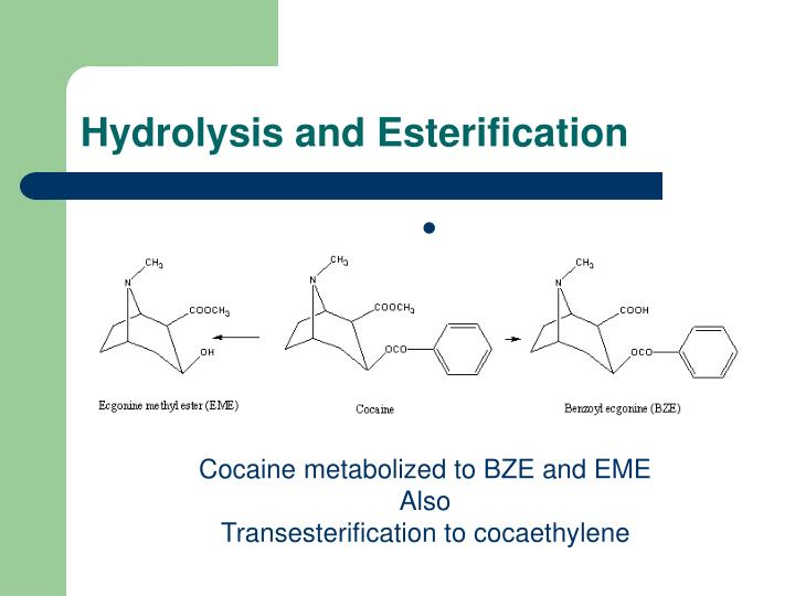 Hydrolysis and Esterification
