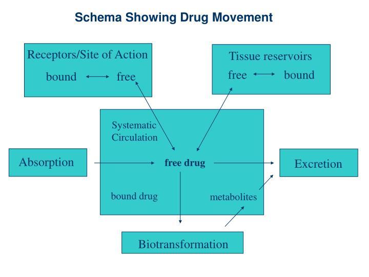 Schema Showing Drug Movement