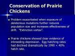 conservation of prairie chickens3