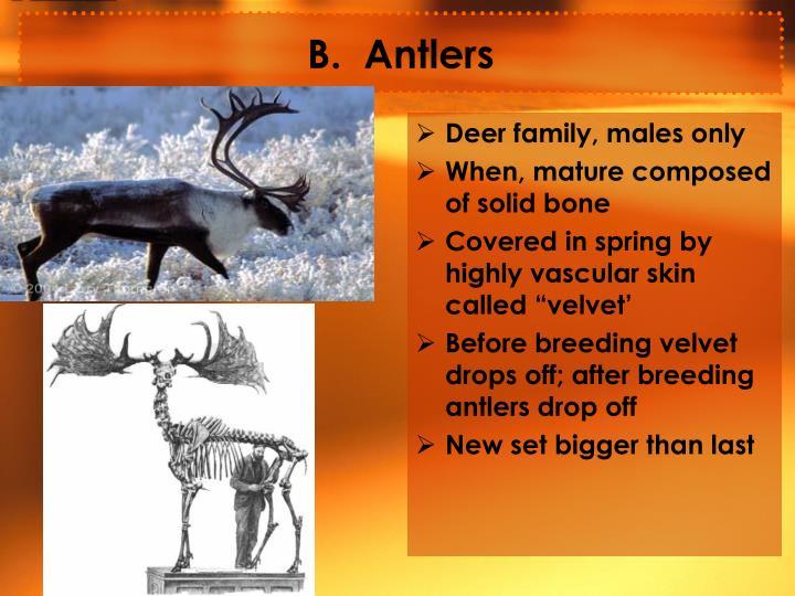 B.  Antlers