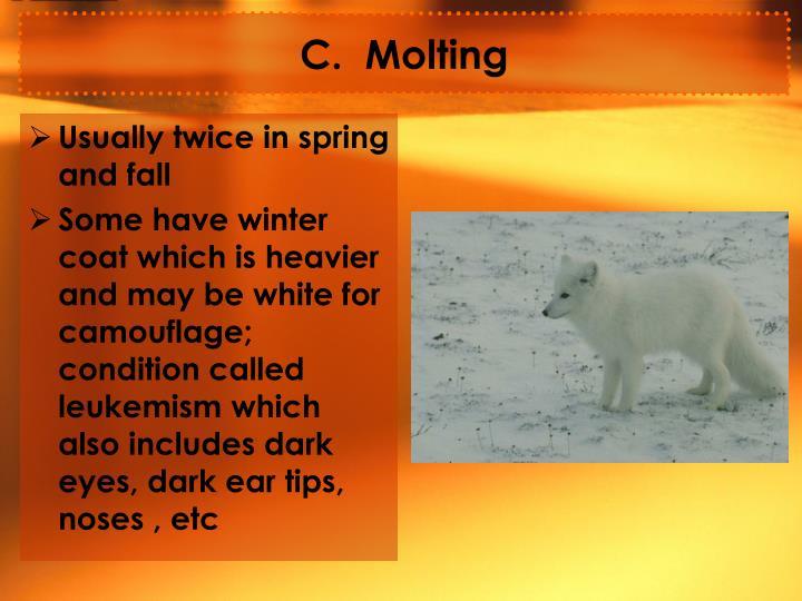 C.  Molting