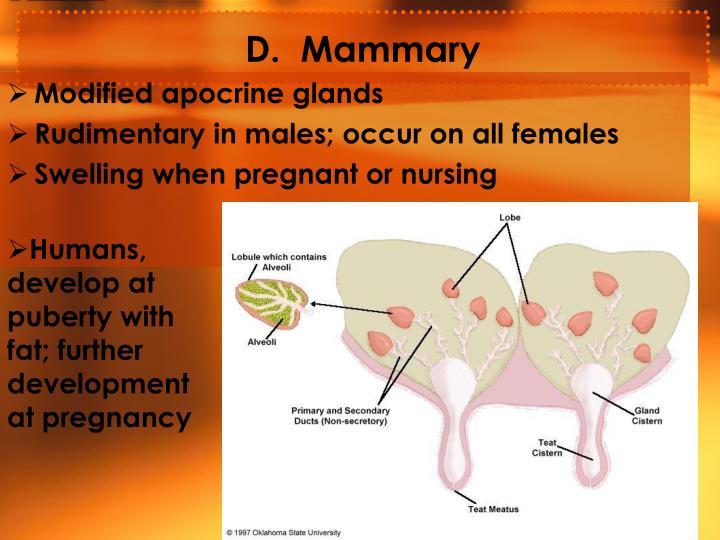 D.  Mammary