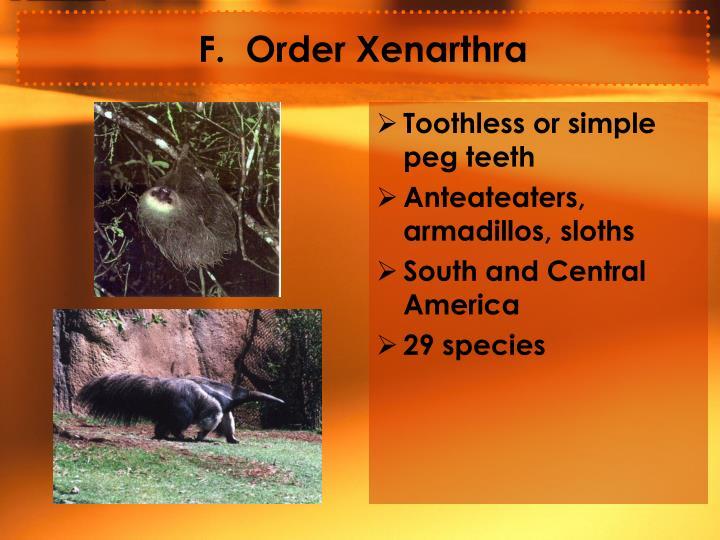 F.  Order Xenarthra