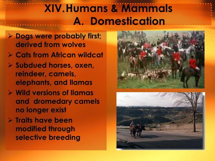 Humans & Mammals