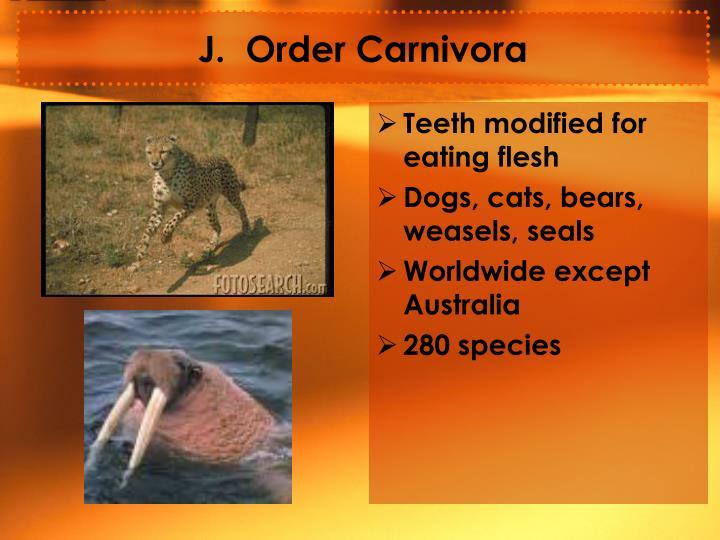 J.  Order Carnivora