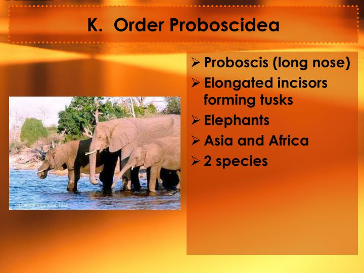 K.  Order Proboscidea