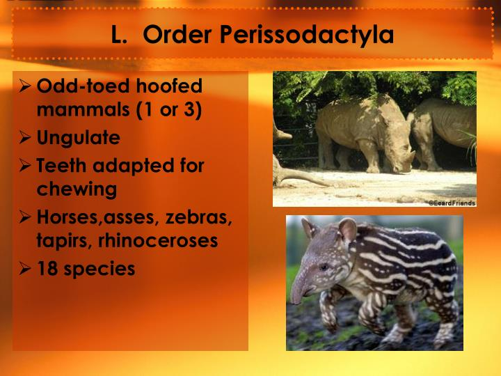 L.  Order Perissodactyla