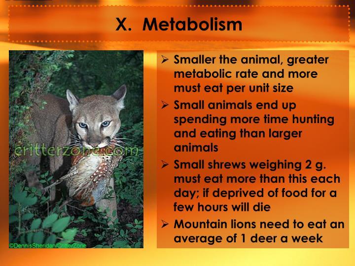 X.  Metabolism