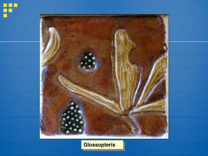Glossopteris
