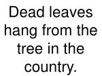 dead leaves hang from the tree in the country