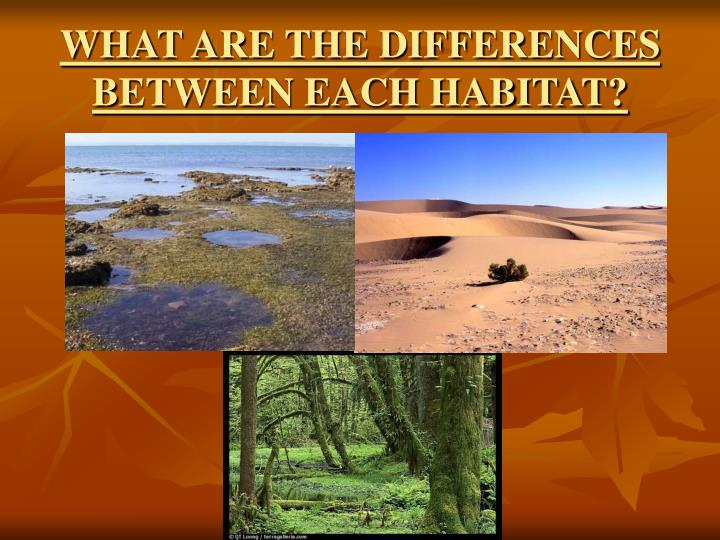 WHAT ARE THE DIFFERENCES BETWEEN EACH HABITAT?
