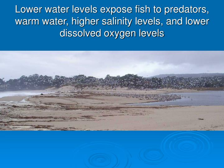 Lower water levels expose fish to predators, warm water, higher salinity levels, and lower dissolved oxygen levels