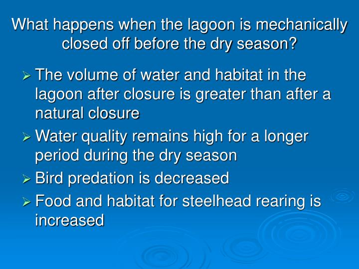What happens when the lagoon is mechanically closed off before the dry season?