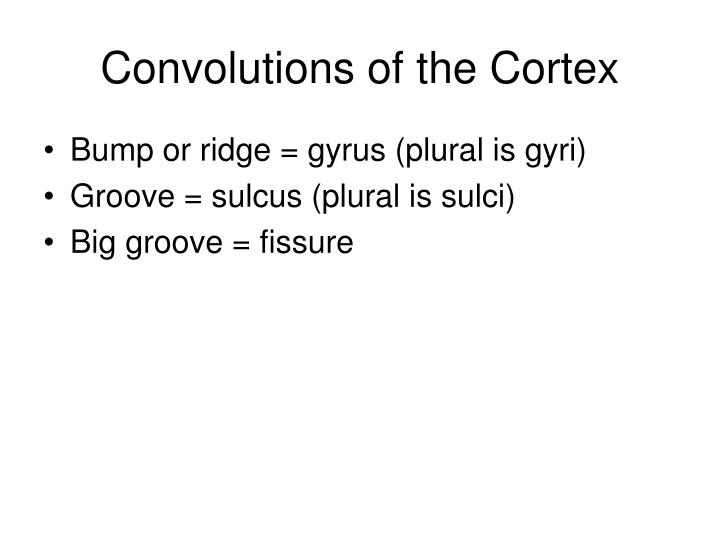 Convolutions of the Cortex