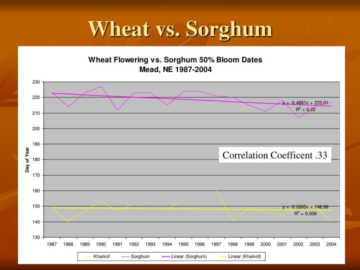 Wheat vs. Sorghum