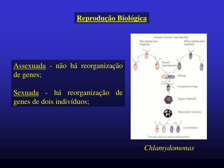 Reprodução Biológica