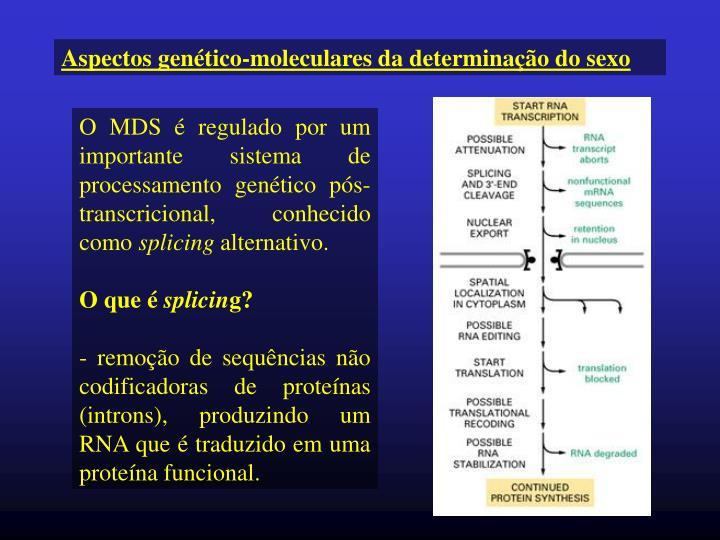 Aspectos genético-moleculares da determinação do sexo