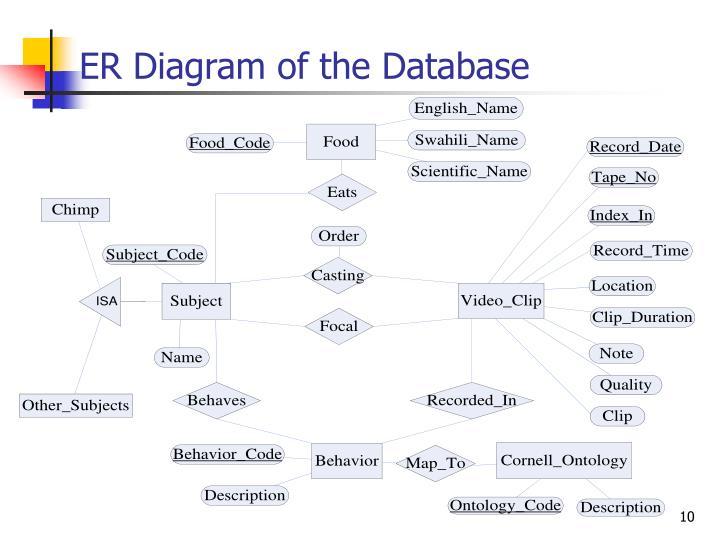 ER Diagram of the Database