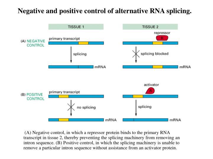 Negative and positive control of alternative RNA splicing.