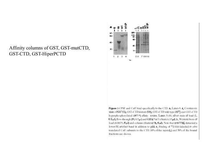 Affinity columns of GST, GST-mutCTD,
