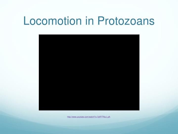 Locomotion in Protozoans