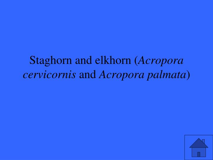 Staghorn and elkhorn (