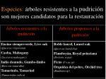 especies rboles resistentes a la pudrici n son mejores candidatos para la restauraci n