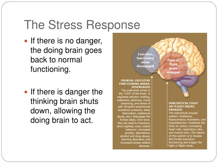 The Stress Response