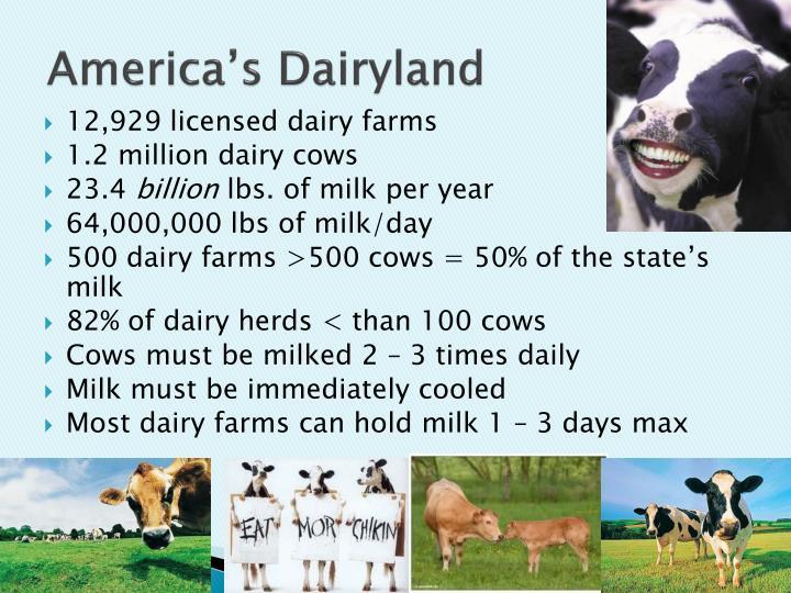 America s dairyland