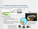 celestial compasses birds and bees