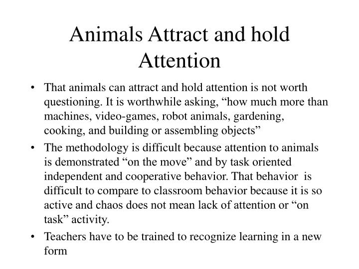 Animals Attract and hold Attention