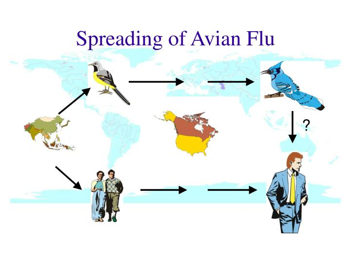 Spreading of Avian Flu