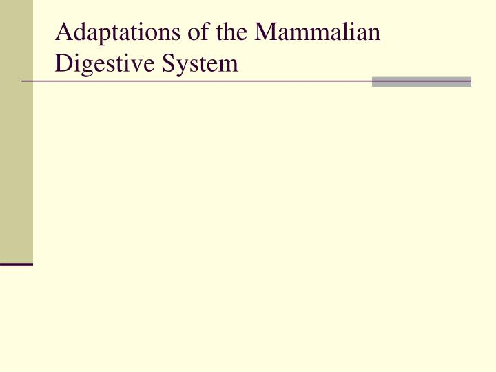 Adaptations of the Mammalian Digestive System