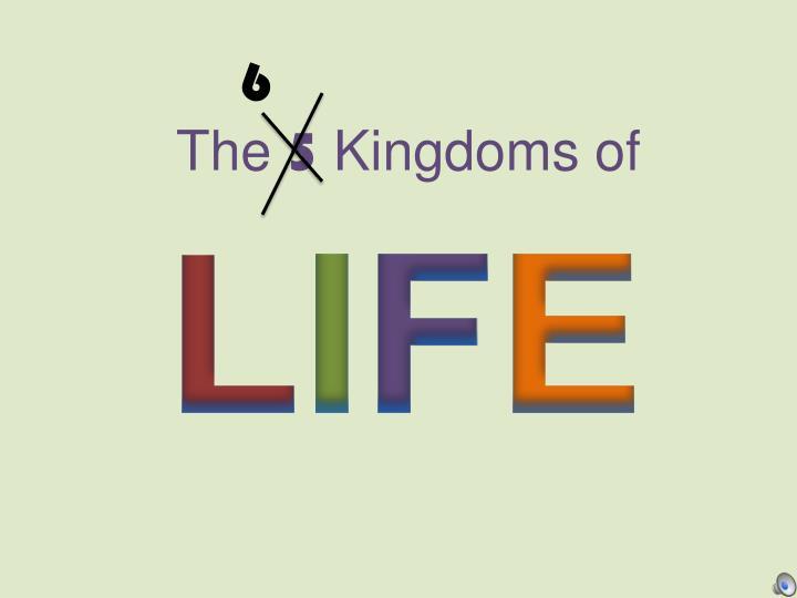 the 5 kingdoms of n.