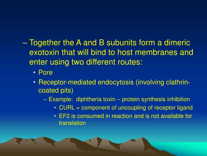 Together the A and B subunits form a dimeric exotoxin that will bind to host membranes and enter using two different routes:
