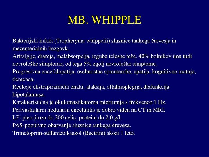 MB. WHIPPLE