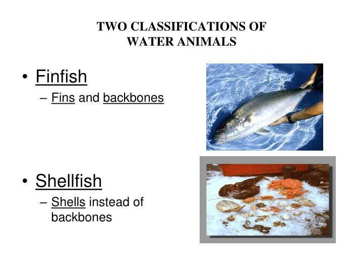 TWO CLASSIFICATIONS OF
