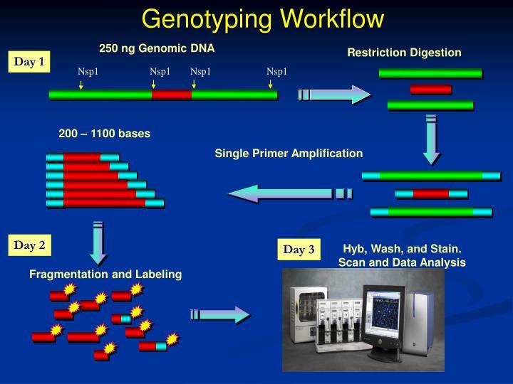 Genotyping Workflow