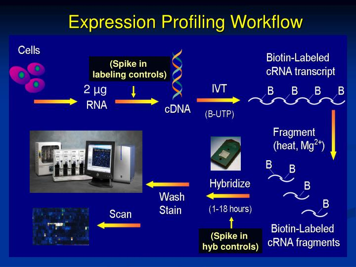 Expression Profiling Workflow