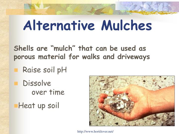 Alternative Mulches