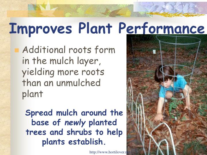 Improves Plant Performance