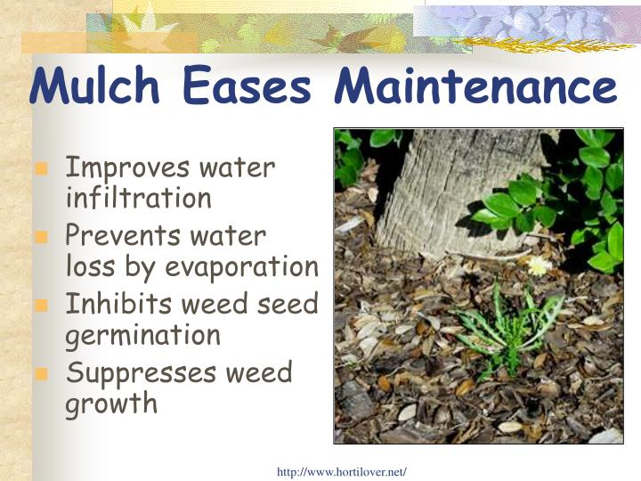 Mulch Eases Maintenance