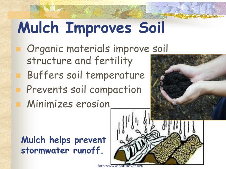 Mulch Improves Soil