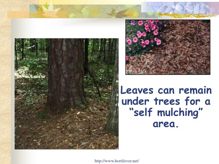 "Leaves can remain under trees for a ""self mulching"" area."