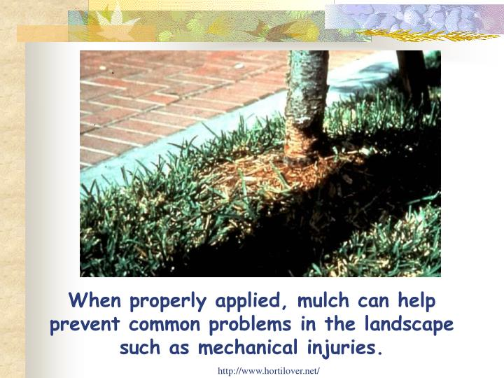 When properly applied, mulch can help prevent common problems in the landscape such as mechanical injuries.