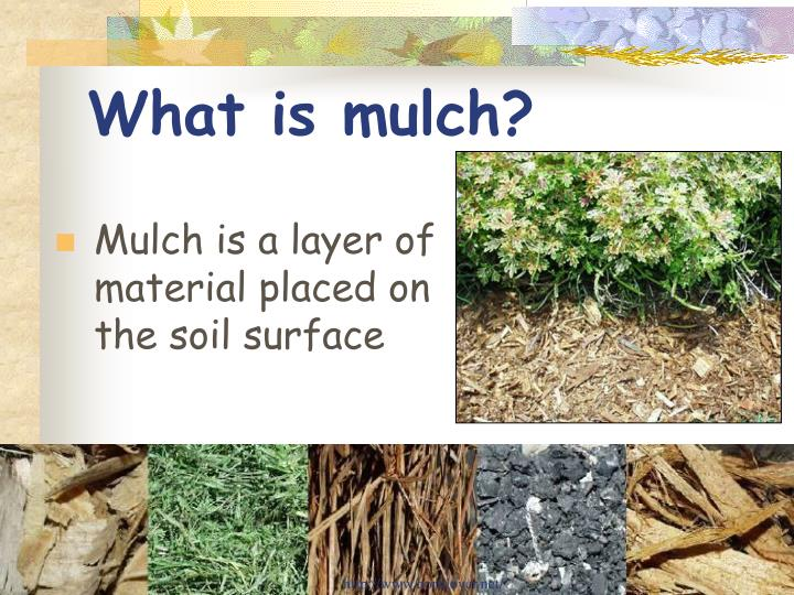What is mulch