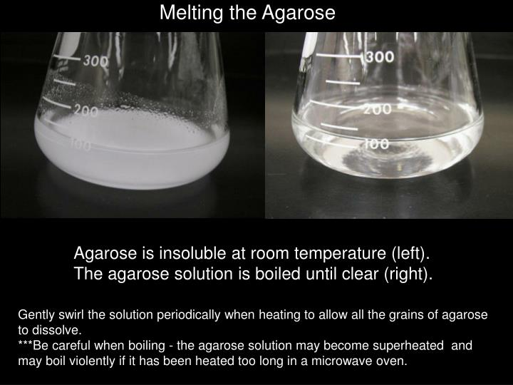 Melting the Agarose