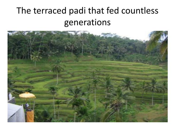 The terraced
