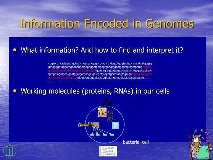 Information Encoded in Genomes